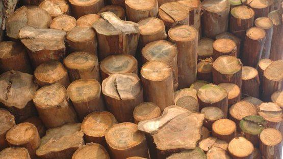 竹木防霉防虫的几种方法