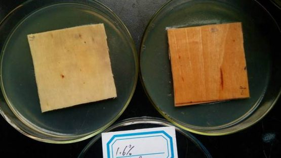 木材防霉性能测试方法